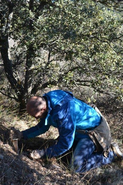 Truffle hunting with Viñas Del Vero in Spain