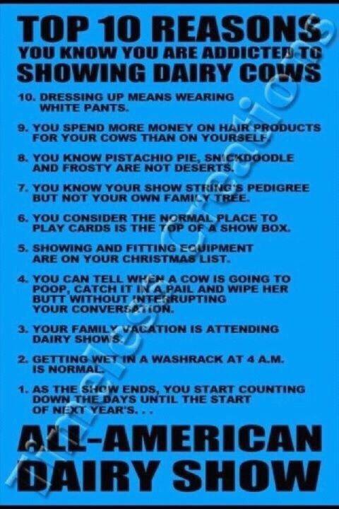 Reasons for Showing Dairy Cattle...I'm guilty of each and every one of these!! Especially asking for fitting equipment for christmas!