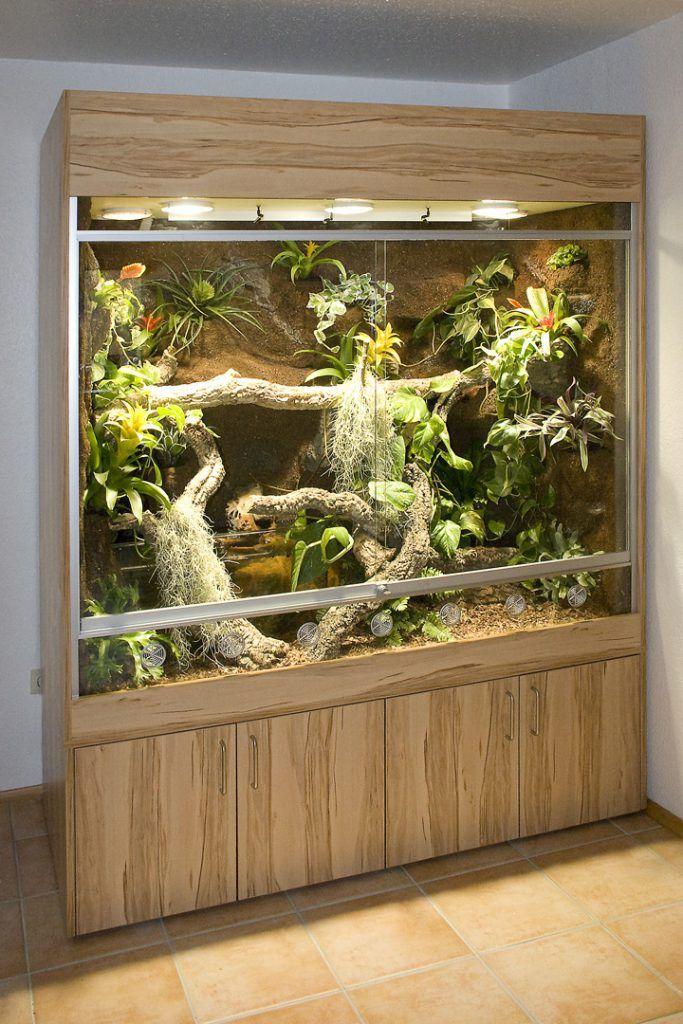 Paludarium Für Australische Wasseragamen Snake Terrarium