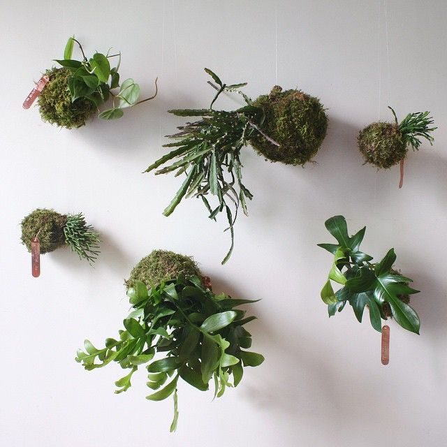 306 best kokedama the japanese moss ball plant images on for Typical japanese garden plants