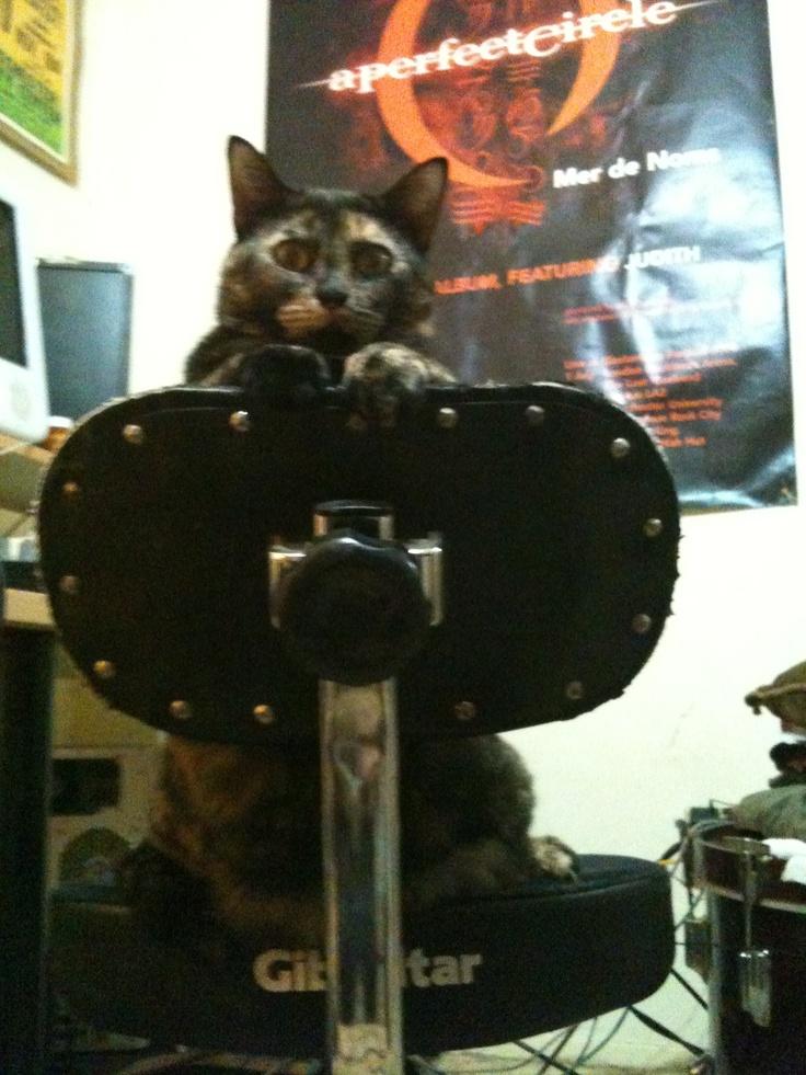 katty on a chair