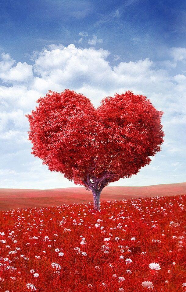 Toda árvore guarda as verdadeiras essências que  afloram afloram a plenitude. Assim deveria ser com o coração das pessoas...