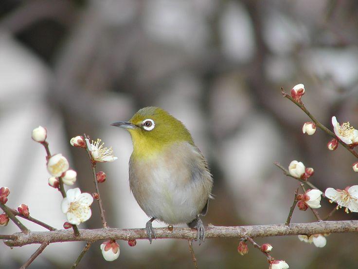 fuglsangcenteret - bird
