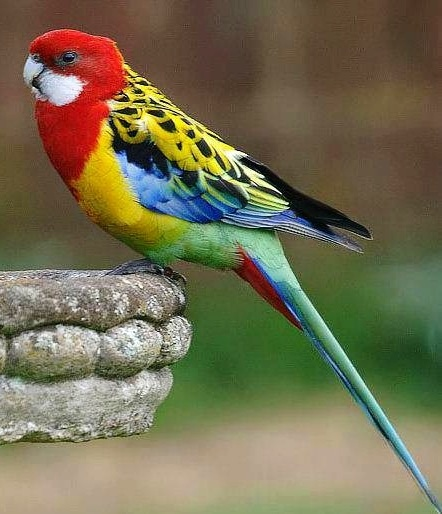 Parrot via Colorfull at www.Facebook.com/Colorfullss ...