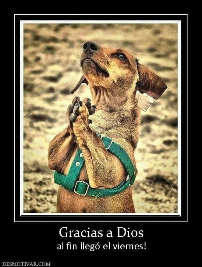 78 best Dachshund images on Pinterest | Perros salchicha, Salchichas ...