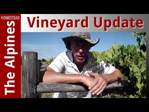 Vineyard update and Tour around 1/4 Hectare Property