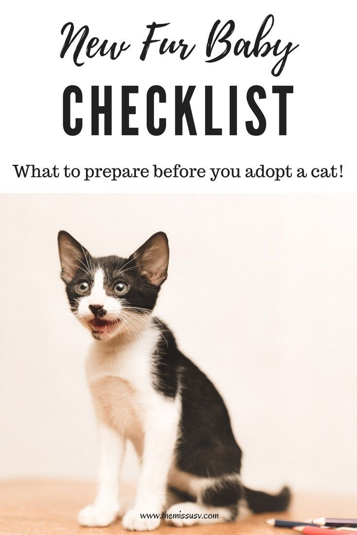 New Fur Baby Checklist What To Prepare Before You Adopt A Cat