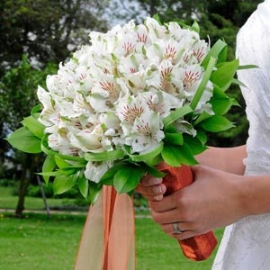 Seriously... grocery store Alstroemeria and some ribbon would make a bouquet for under 20 dollars.