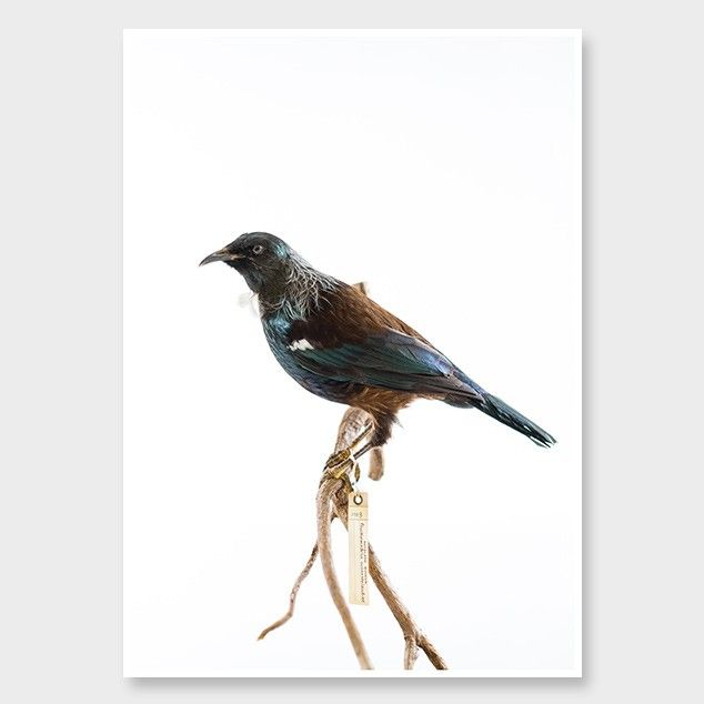 Songbird Photographic Print by Shelton Woolright