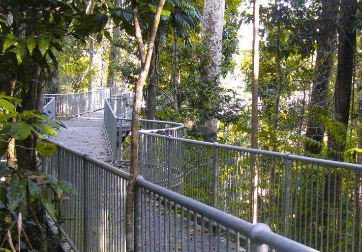 Rainforest Walkway Borneo 2017