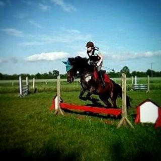 #absalonsbabybel #babybel #angloaraber #sportpferd #equestrian #love #instahorse #dreamhorse #photograph #photography #pelham #Horseware #horsewarerambo #Frühling #sonne #springen #grasplatz #outdoor #springsattel #showjumping #springtraining #flyinghorse http://tipsrazzi.com/ipost/1523441643100264800/?code=BUkWhpVB1lg