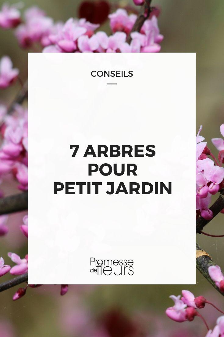 7 arbres parfaits en petit jardin