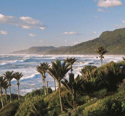 West Coast Nikau Palms