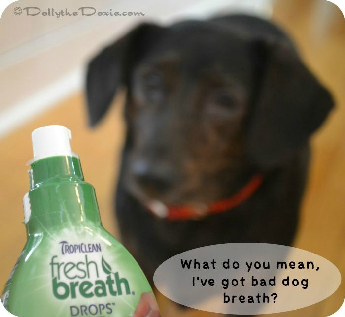 Help your bad dog breath with TropiClean Fresh Breath Drops #TropiCleanFresh cleans doggie breath and gives dogs fresh dog breath.