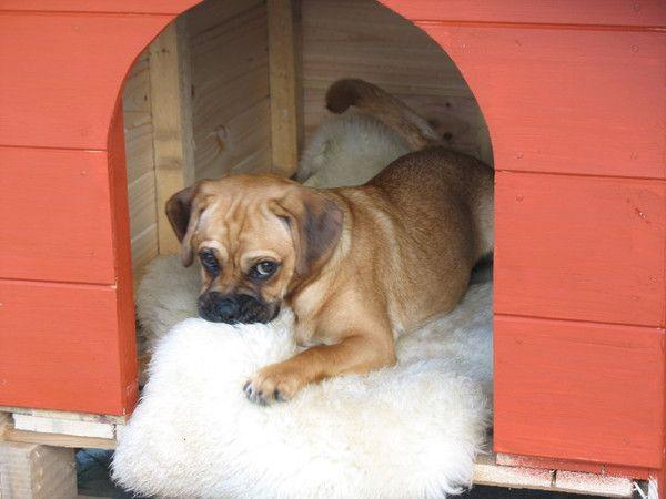 Sheepskin for Pets