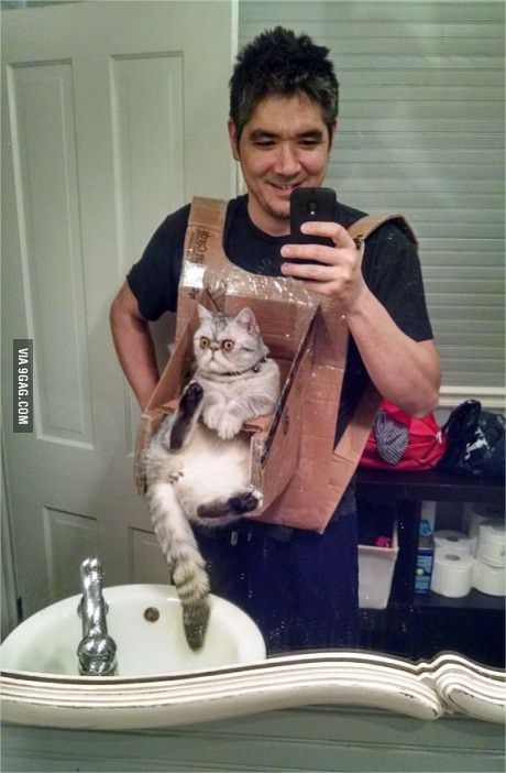 Cat Chest Harness..I just can't get over its face!