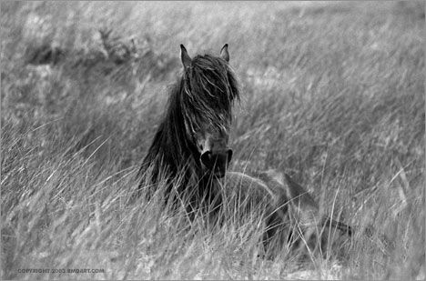 beautiful shaggy horse in a field