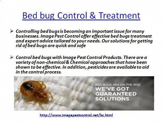 Bed Bug Control Bangalore By Imagepest Control Pestcontrol Pestcontrolservices Rodentcontrol Domyownpestcontrol Diype Bug Control Bed Bug Control Pest Control