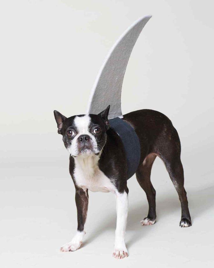 Think Fin: Dog Shark Halloween Costume