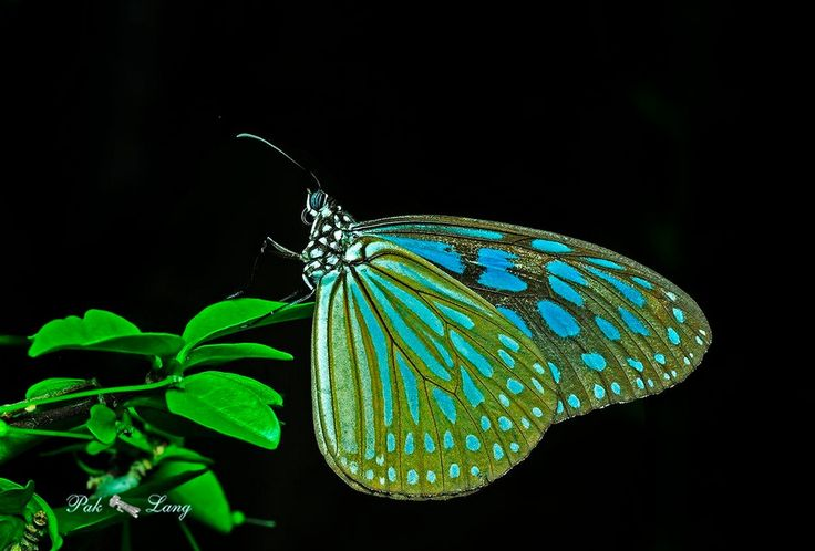 35 Beautiful Butterfly Pictures