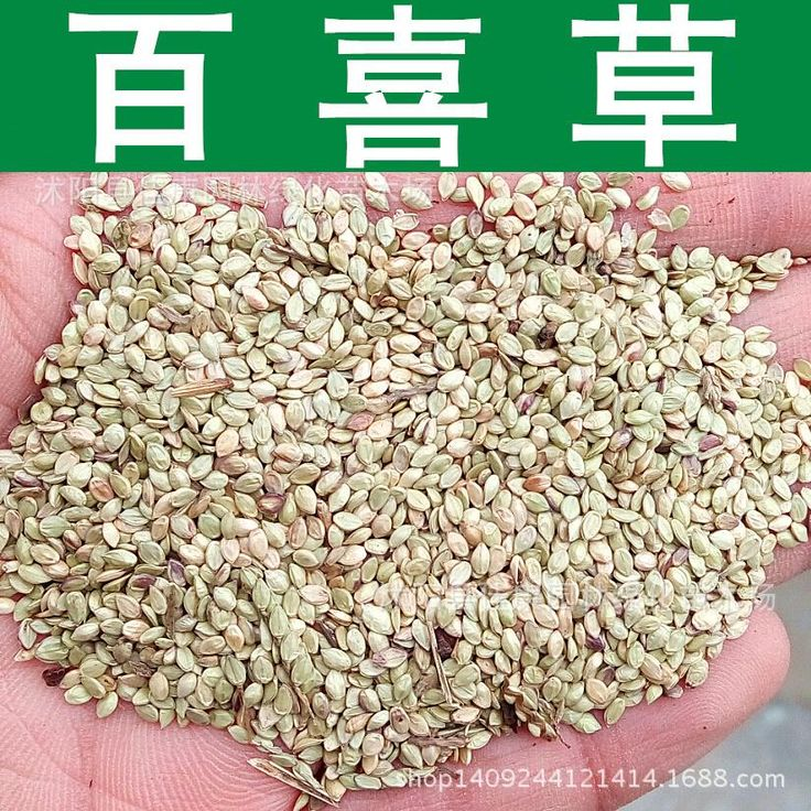 Baja paspalum seed soil and water conservation road slope 200g / Pack