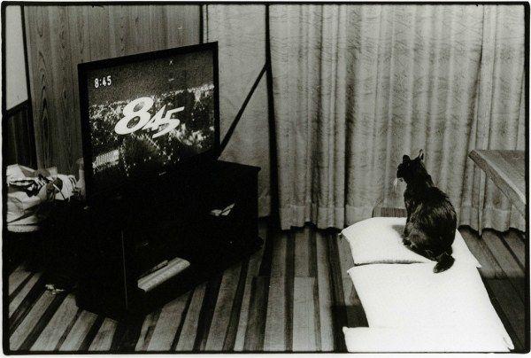 Большая подборка фотографий Джунку Ниcимура (62 снимка)
