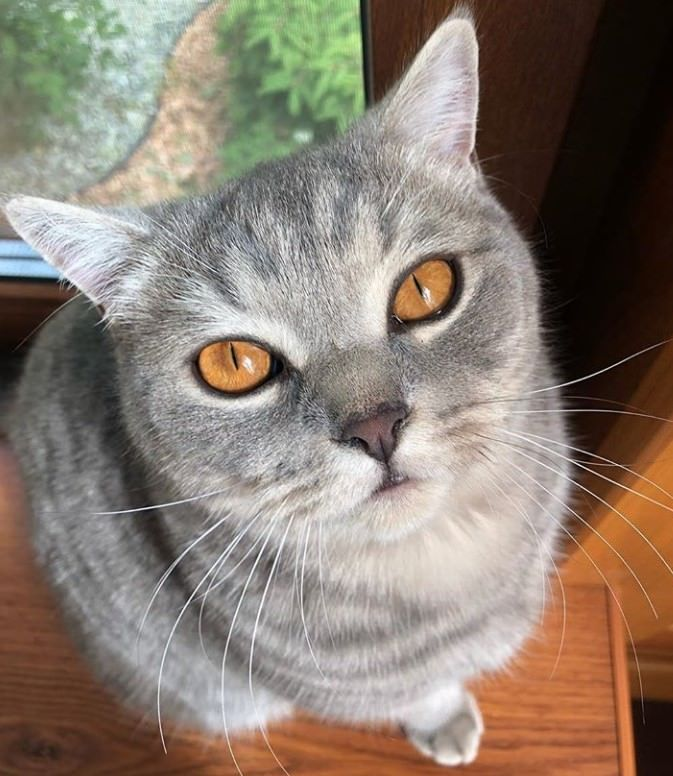 32 Female Cat Names for Grey Cats | Cat Names | Cat names
