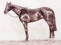 Night Watch, winner of the 1918 Melbourne Cup