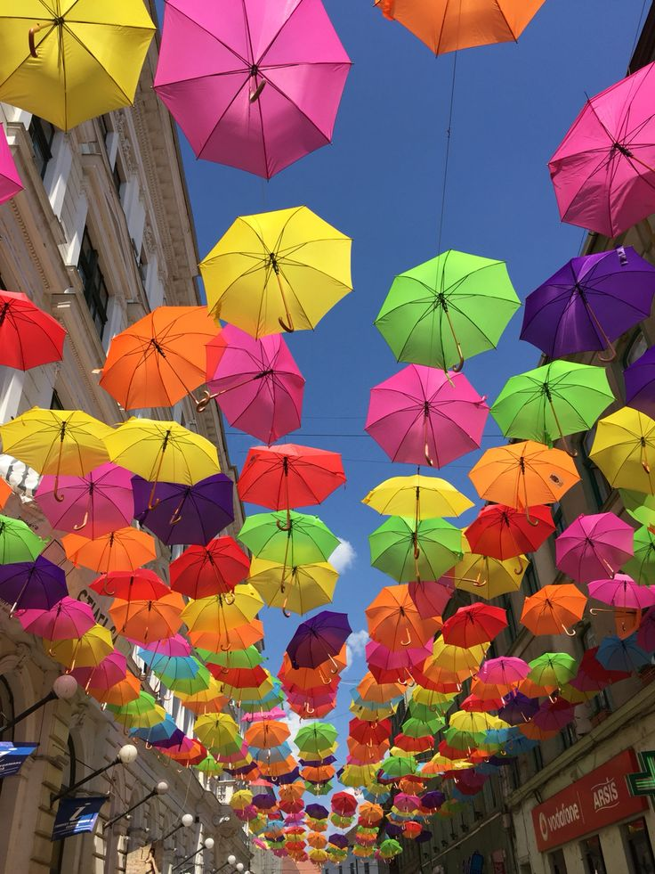 Umbrella street in Timisoara, Romania