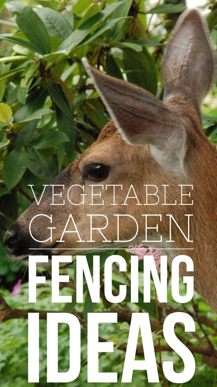 want to keep animal pests out of your vegetable garden learn how to fence out