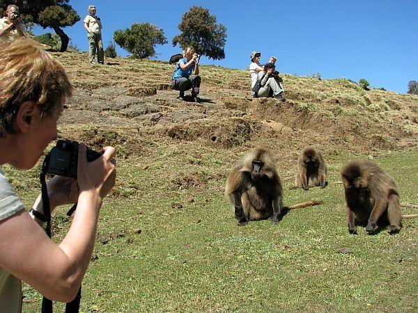 Turyści wśród dżelad