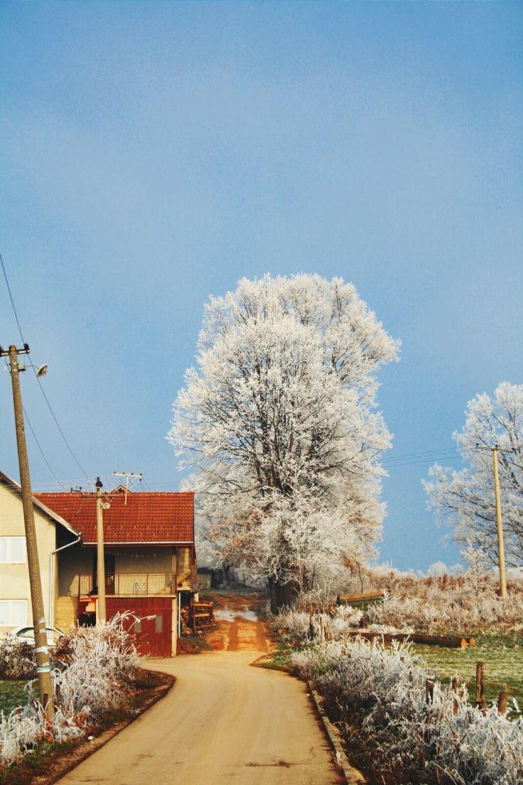 hoar trees kosjeric