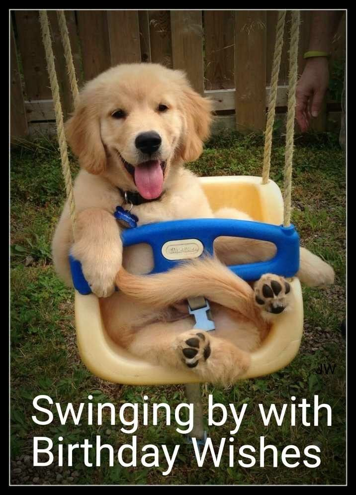 Pin By Joy Withers On Happy Birthday And Sayings Cute Dogs