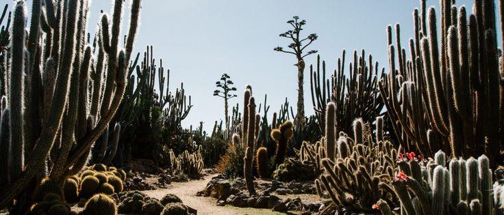 Cactus country, west of Cobram, Victoria.