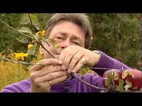 Alan Titchmarsh - Growing fruit