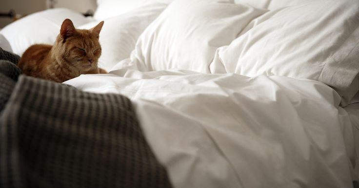 Cómo quitar el pelo de gato de las sábanas. Los dueños de los gatos saben la mejor forma de decirle a su mascota qué hacer y si Sultán se posa sobre tu cama mientras estás en el trabajo todo el día, las sábanas y los edredones pronto se llenan de pelos. Tienes opciones para eliminar el pelo de gato de las sábanas para que puedas estirar la jornada entre lavados. Elige tu favorita o ...
