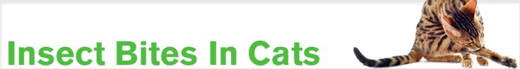 Natural Flea Remedy Cats | on Cats | Natural Flea Remedies for Cats | First Pet Naturals -Natural ...
