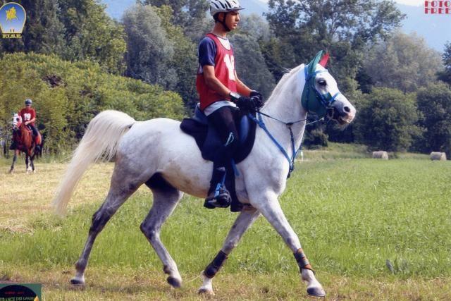 Cavallo p.s.a puro sangue arabo anno 2006  https://www.equirodi.it/annunci/cavalli-in-vendita.htm