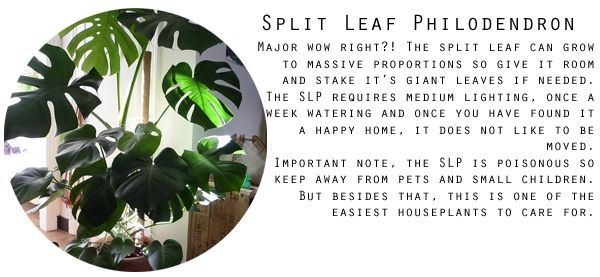 The Best Indoor Plants and Trees. Kinda over the Fiddle Leaf
