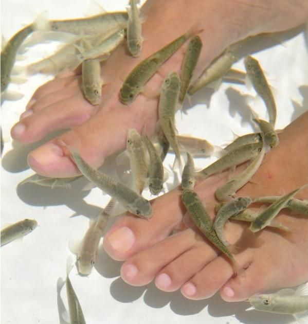 Get spoiled and relax during your vacation in Punta Cana. During the Doctor Fish tour you will recieve a pedicure you won´t forget.