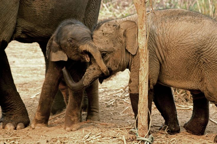 Why You Should Never Share or Like These Baby Elephant Videos