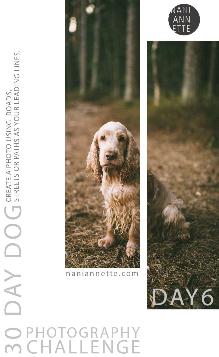 Day 6 of 30 Day Dog Photography Challenge!  Create a photo using roads, streets or paths as your leading lines.   Join the fun and share your images using #30daydogchallenge in Instagram.