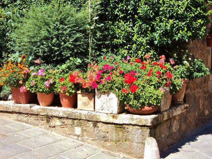 flowers in Montalcino