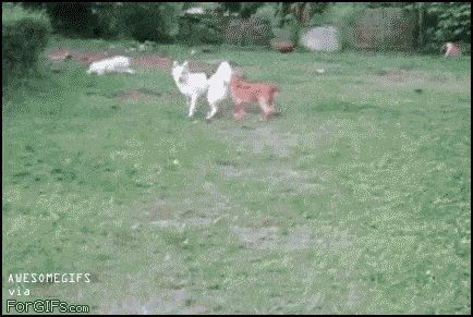 This dog who should look before he leaps.