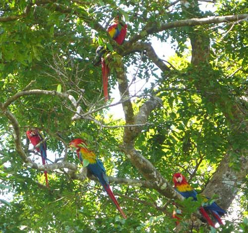 Osa Peninsula Costa Rica Hotels: 1000+ Images About Costa Rica On Pinterest