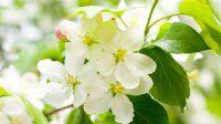 Ağaç dalındaki güzel çiçekler / Çiçek Türleri ve Çiçek Resimleri
