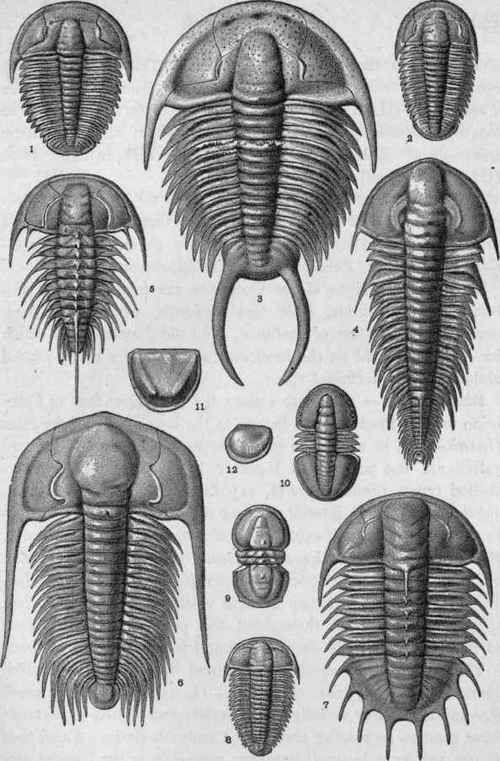 Plate-III-Cambrian-Crustacea.jpg (500×761) #Cambrian