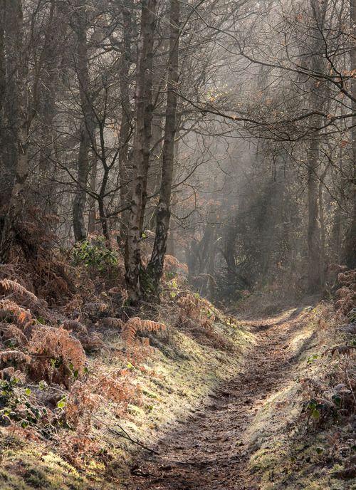 Ethereal frosty beauty in Puttenham, a village in Surrey, England. (Carol Drew, flickr)