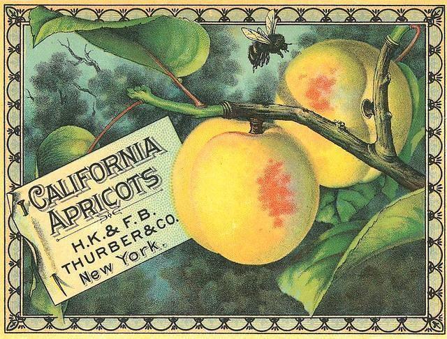 Vintage label ~ California apricots