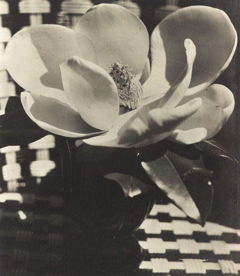 Man Ray, Magnolia, 1926.